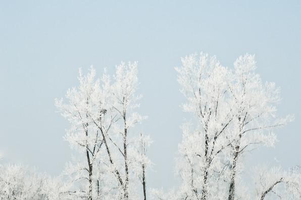 02 Iced Fields 007.jpg