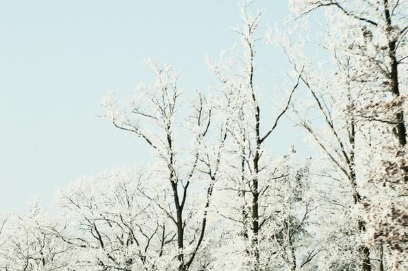 02 Iced Fields 021.jpg