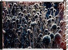 PL_1010053_edit_Frozen_Flowers.jpg