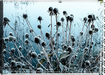 PL_1010104_EDIT_Frozen_Flowers.jpg