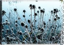 PL_1010104_EDIT_Frozen_Flowers.jpg