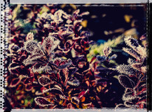 PL_1010115_edit_Frozen_Flowers.jpg