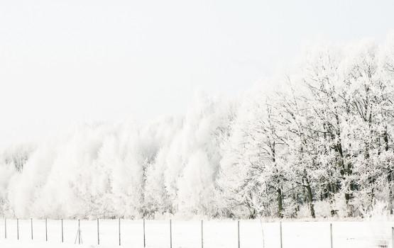 02 Iced Fields 009.jpg