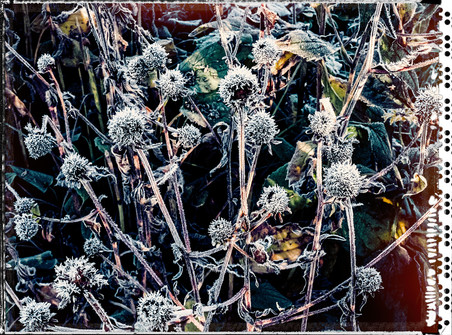 PL_1010048_edit_Frozen_Flowers.jpg
