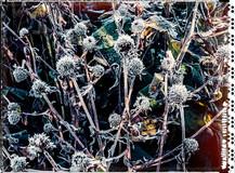 PL_1010048_edit_Frozen_Flowers.jpg