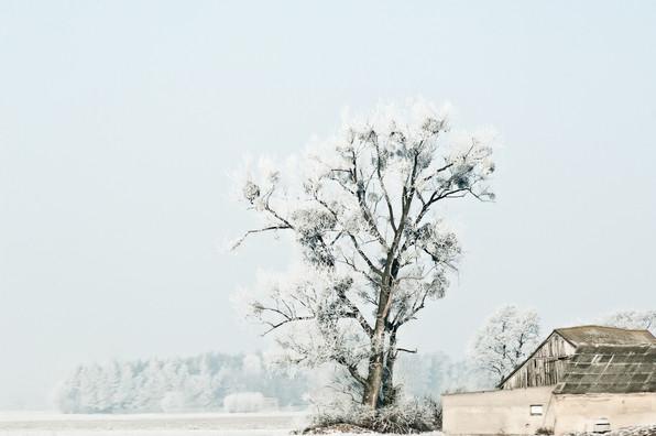 02 Iced Fields 006.jpg