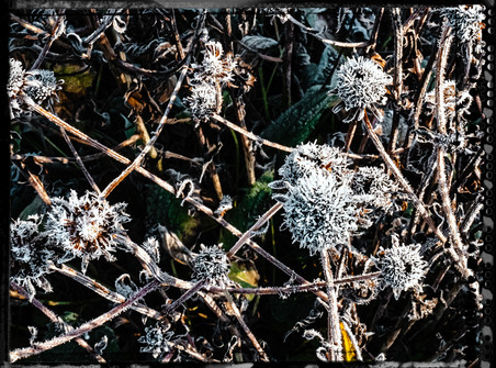 PL_1010076_edit_Frozen_Flowers.jpg