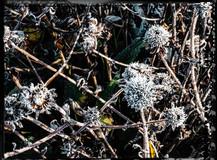 PL_1010076_edit_Frozen_Flowers.jpg
