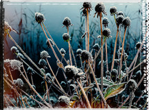 PL_1010112_edit_Frozen_Flowers.jpg