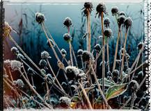 PL_1010112_edit_Frozen_Flowers.jpg