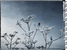 PL_1160427_Frozen_Flowers.jpg