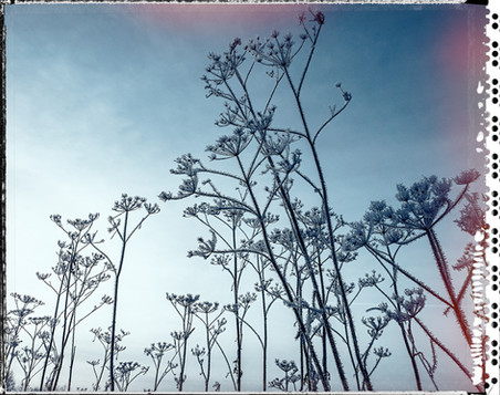 PL_1160446_edit_Frozen_Flowers.jpg