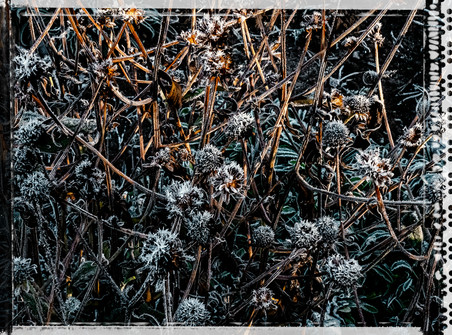 PL_1010096_edit_Frozen_Flowers.jpg