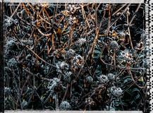 PL_1010096_edit_Frozen_Flowers.jpg