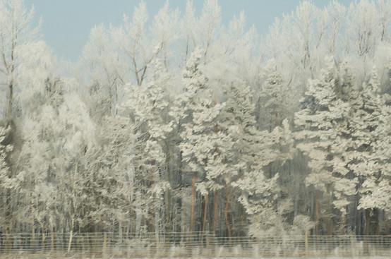 02 Iced Fields 023.jpg