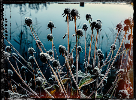 PL_1010109_edit_Frozen_Flowers.jpg