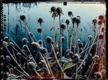 PL_1010109_edit_Frozen_Flowers.jpg