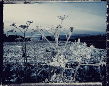 PL_1160424_edit_Frozen_Flowers.jpg
