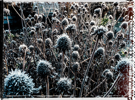PL_1010057_edit_Frozen_Flowers.jpg