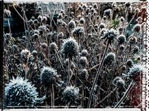 PL_1010057_edit_Frozen_Flowers.jpg