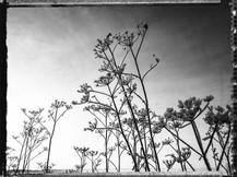 PL_1160447_Frozen_Flowers.jpg