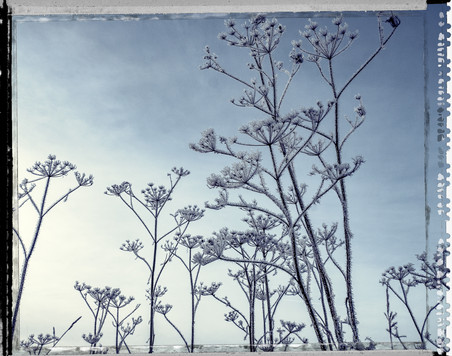 PL_1160436_edit_Frozen_Flowers.jpg