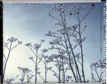 PL_1160436_edit_Frozen_Flowers.jpg