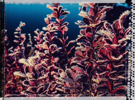 PL_1010114_edit_Frozen_Flowers.jpg