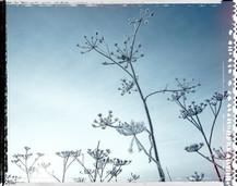 PL_1160458_edit_Frozen_Flowers.jpg
