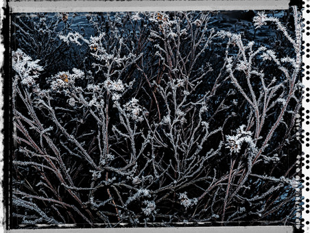 PL_1160341_Frozen_Flowers.jpg