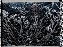 PL_1160341_Frozen_Flowers.jpg