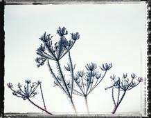 PL_1160465_edit_Frozen_Flowers.jpg