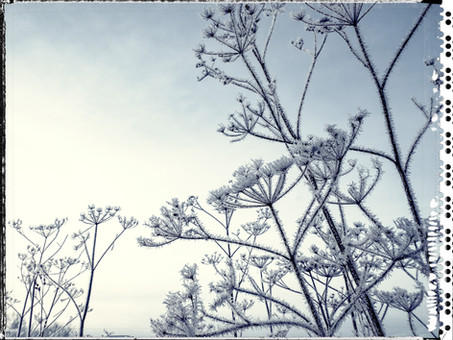 PL_1160440_edit_Frozen_Flowers.jpg