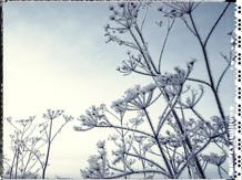 PL_1160440_edit_Frozen_Flowers.jpg