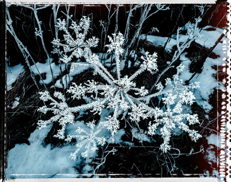 PL_1160506_edit_Frozen_Flowers.jpg
