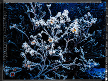 PL_1160336_Frozen_Flowers.jpg