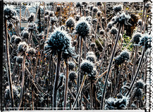 PL_1010063_edit_Frozen_Flowers.jpg