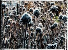 PL_1010063_edit_Frozen_Flowers.jpg