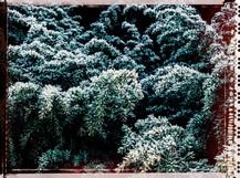 PL_1010039_edit_Frozen_Flowers.jpg