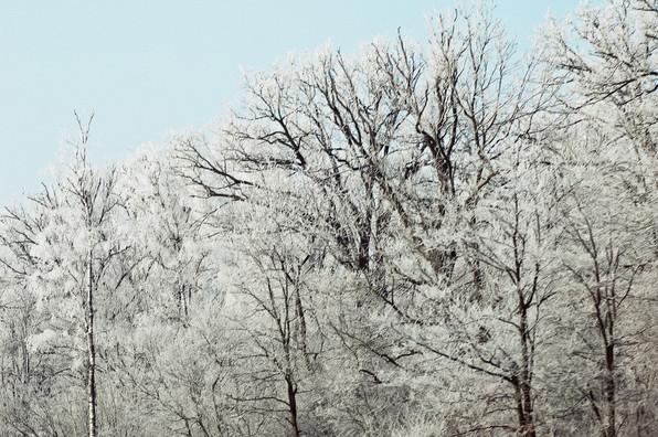 02 Iced Fields 034.jpg