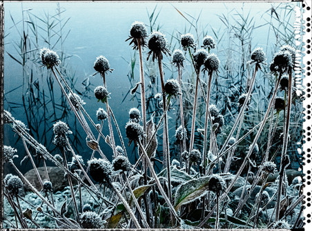 PL_1010106_EDIT_Frozen_Flowers.jpg