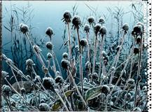 PL_1010106_EDIT_Frozen_Flowers.jpg