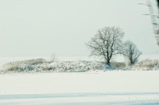 02 Iced Fields 045 copy.jpg