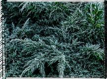 PL_1010098_edit_Frozen_Flowers.jpg