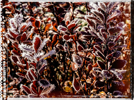 PL_1010142_edit_Frozen_Flowers.jpg