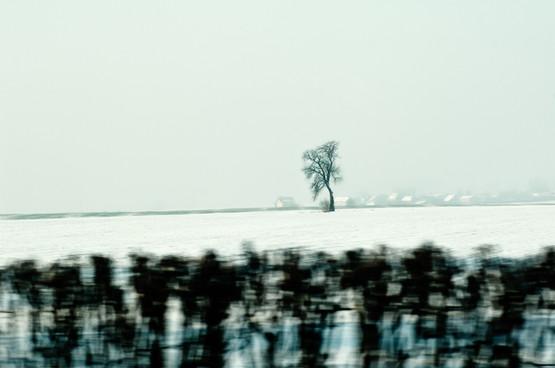02 Iced Fields 044 copy.jpg