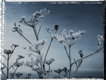 PL_1160426_Frozen_Flowers.jpg