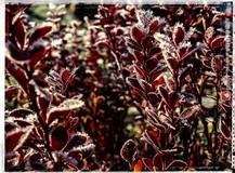 PL_1010124_edit_Frozen_Flowers.jpg