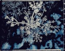 PL_1160417_edit_Frozen_Flowers.jpg