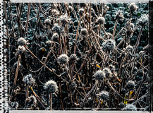 PL_1010079_edit_Frozen_Flowers.jpg